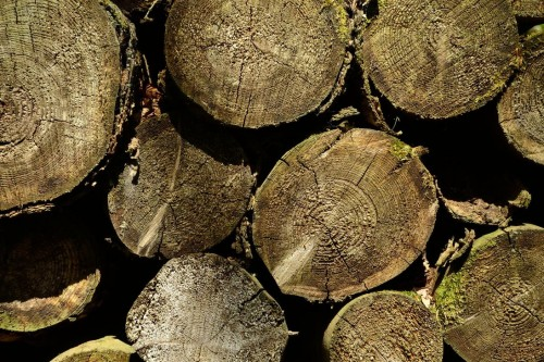 Pile of Logs Texture